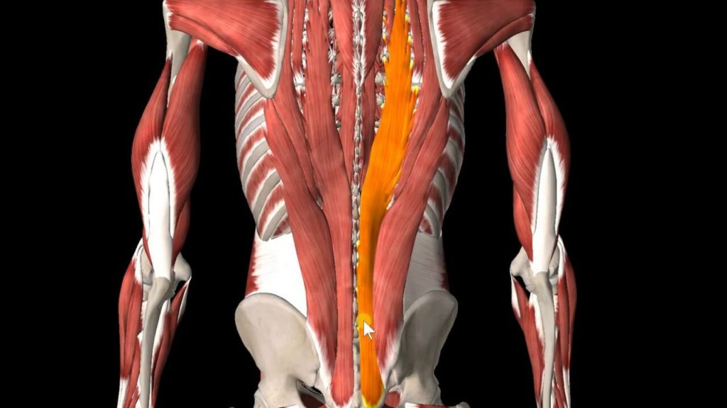 Back Spasm: What to do when you get Back Pain